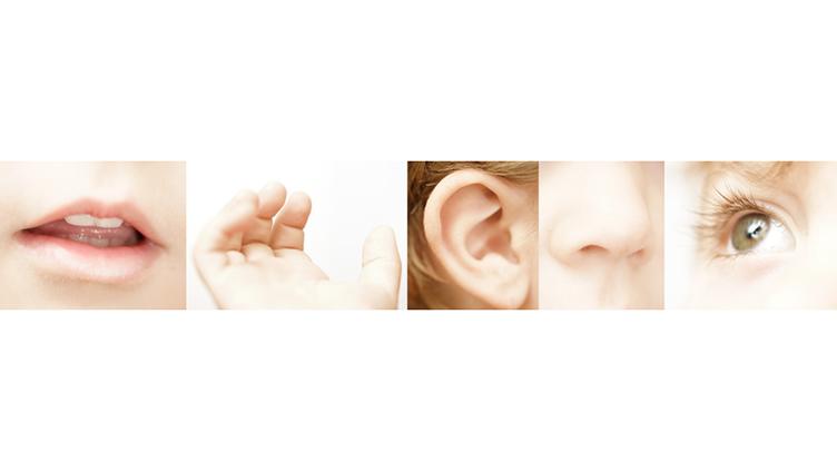 5 Sinnesorgane: Mund,Haut,Ohr,Nase,Auge